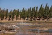 Haifeng wetland vegetation edge of Yunnan — Stock Photo