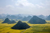 Canola flower Luoping Rooster under the peak — Stock Photo