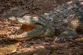 Chongqing crocodile crocodile pool center — Foto Stock