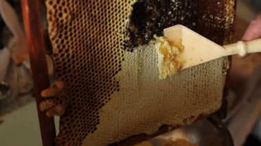 Collecting honey from combs — Stockvideo
