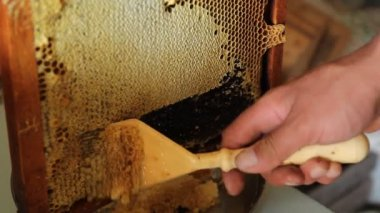Collecting honey from combs — Stock Video