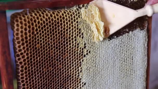 Collecting honey from combs — Vidéo