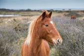 Wild Pony — Stock Photo
