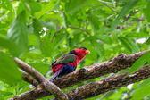 Beutiful red parrot perching on tree's branch — Stock Photo