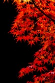 Färgglada löv höst säsongen — Stockfoto