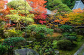 Foglio variopinto autunno stagione in Giappone — Foto Stock