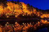 Light-up of Colorful Autumn Leaf Season in Japan — Stock Photo