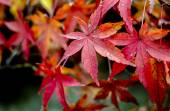 Bright autumn leaves in the natural environment — Stock Photo