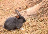 Baby rabbit — Stock Photo