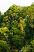 Rainforest canopy — Stock Photo