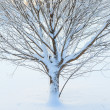 Abstract closeup of a tree in winter — Stock Photo #58437461