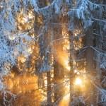 Sun rays through frosty trees — Stock Photo #61699609