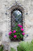 Castle window and vivid pink flowers — Stock Photo