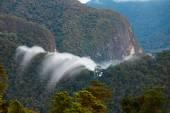 Exotic rainforest landscape — Stock Photo