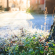 Sun shining over farm yard to frozen lingonberry twig — Stock Photo #62084607