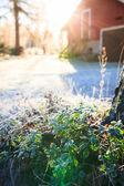 Słońce świeciło nad zdewastowany do zamrożonych borówki brusznicy gałązka — Zdjęcie stockowe