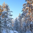 Snowy forest and warm sunlight — Stock Photo #62258833