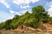 Green forest on rocky shore — Stock Photo