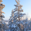 Snowy forest and warm sunlight — Stock Photo #62851989