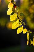 Fresh green leaves background — Stock Photo