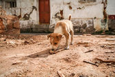 Small puppy on indian streets — Stock Photo