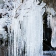 Long icicles hanging from tree branches — Stock Photo #65436403