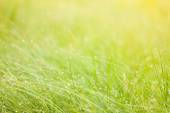 Abstract moisture grass background — Stock Photo