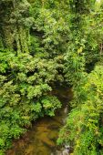 Small river in jungle — Stock Photo