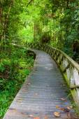 Boardwalk in dense rainforest — Stock Photo
