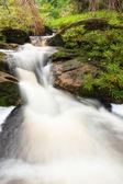 Mały strumień w dżungli — Zdjęcie stockowe