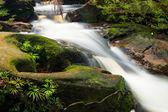 Small stream in jungle — Stock Photo