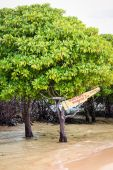 Mangrove tour sign in tree — Stock Photo
