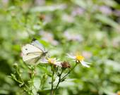 Butterfly and flower in summer nature — Stock Photo