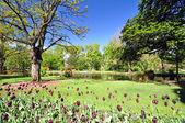 Queenstown Gardens New Zealand — Stock Photo