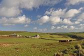 Farmland at Baggy Point — ストック写真