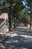 Calvary avenue of trees at Ialyssos — Stock Photo