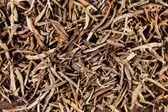 Black green fruit herbal tea — Stock Photo
