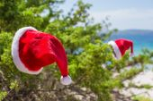 Santa hat on spruce bush background the turquoise sea on tropical beach — Stock Photo