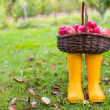Straw basket with red apples on yellow rubber boots at the grass — Stock Photo #53956953