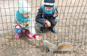 Little girls feeds a squirrel in Central park, New York, America — Foto de Stock