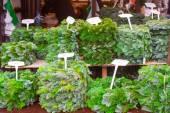 Coniferous trees on sale outdoors — Stock Photo