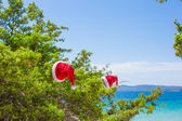 Red christmas hat on on branch background turquoise sea — Fotografia Stock