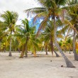 Palm grove on white sandy tropical beach at exotic country — Stock Photo #62660831