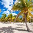 Palm grove on white sandy tropical beach at exotic country — Stock Photo #62660899