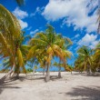 Palm grove on white sandy tropical beach at exotic country — Stock Photo #62661061