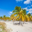 Palm grove on white sandy tropical beach at exotic country — Stock Photo #62661113