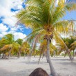Palm grove on white sandy tropical beach at exotic country — Stock Photo #62661155