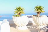 Large ceramic with plant greek island scene on Santorini — Stock Photo
