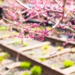 Sunny spring day on New Yorks High Line — Stock Photo #64870329