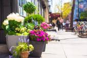 Bright flowers in a pot at New York streets — Stock Photo